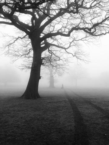 trees-450854_1920